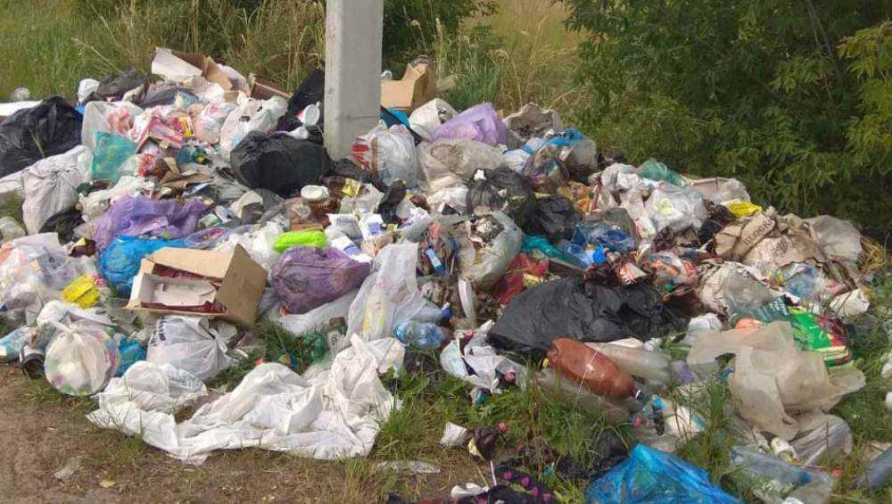 Дачники устроили стихийную свалку возле брянского посёлка Новые Дарковичи