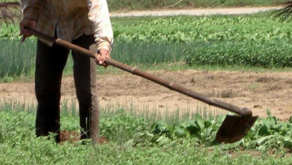 В Новозыбкове пенсионер ударил соседку тяпкой по лицу