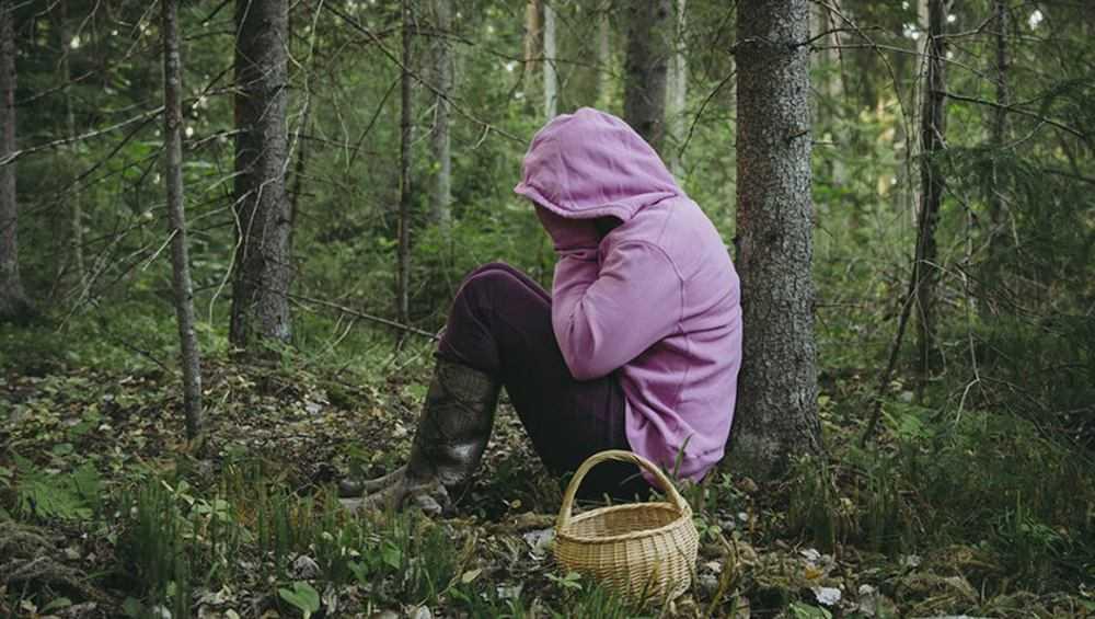 Под Дятьковом пять грибников заблудились в лесах