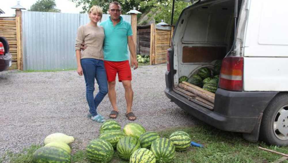 В Суземке фермерская семья вырастила более двух тонн арбузов