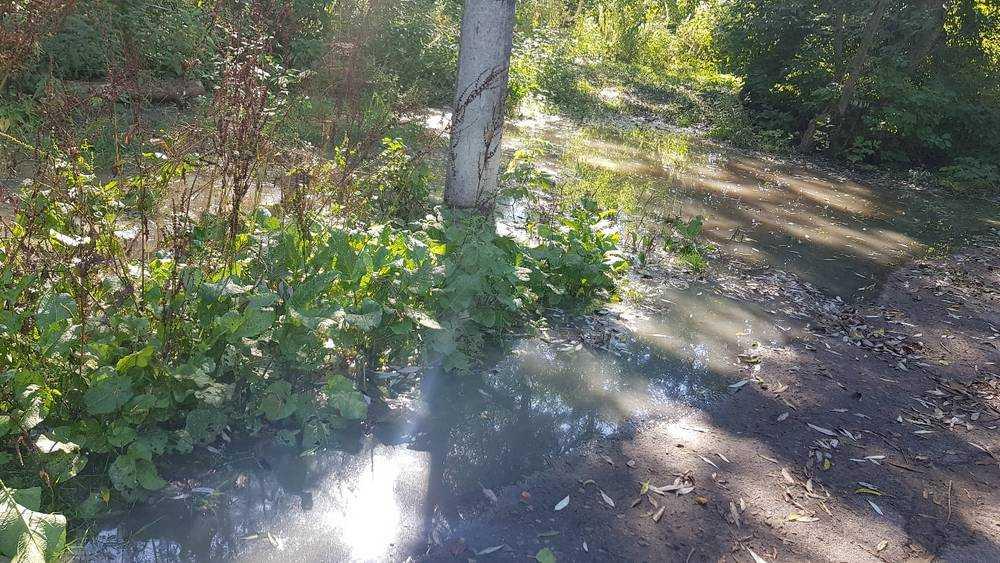 В Брянске лес возле Нового городка затопили стоки канализации