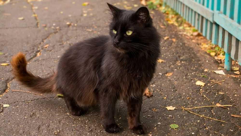 В Унече бешеный черный кот покусал ребенка