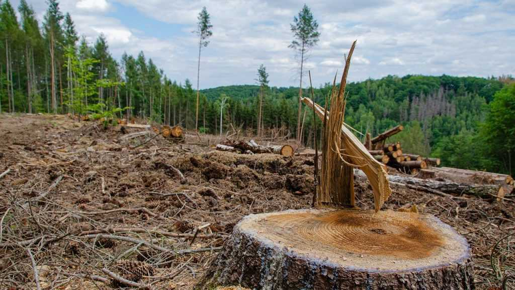Россия рискует остаться без зеленого богатства