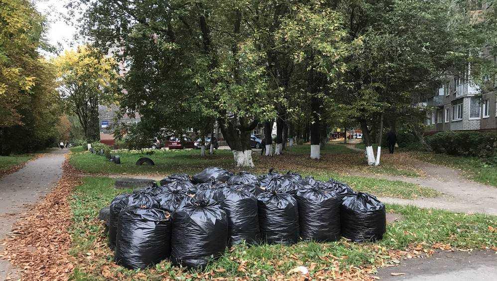 По Брянску расставили мешки с осенним золотом