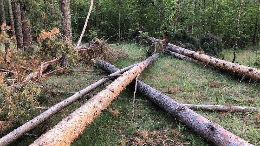 Брянские лесники не заметили бурелом возле Партизанской поляны