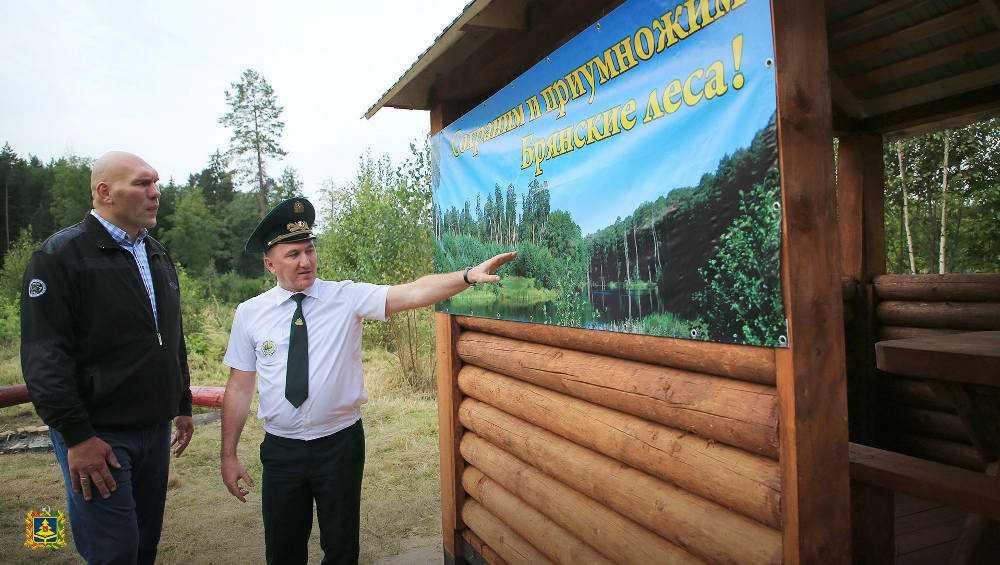 В брянских лесах началась экологическая акция