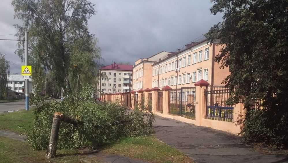 В Брянске сильный ветер сломал дерево возле второго лицея