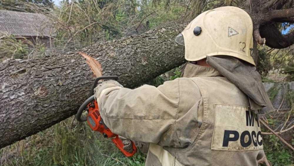 В Брянской области ураган оставил без электричества 700 человек