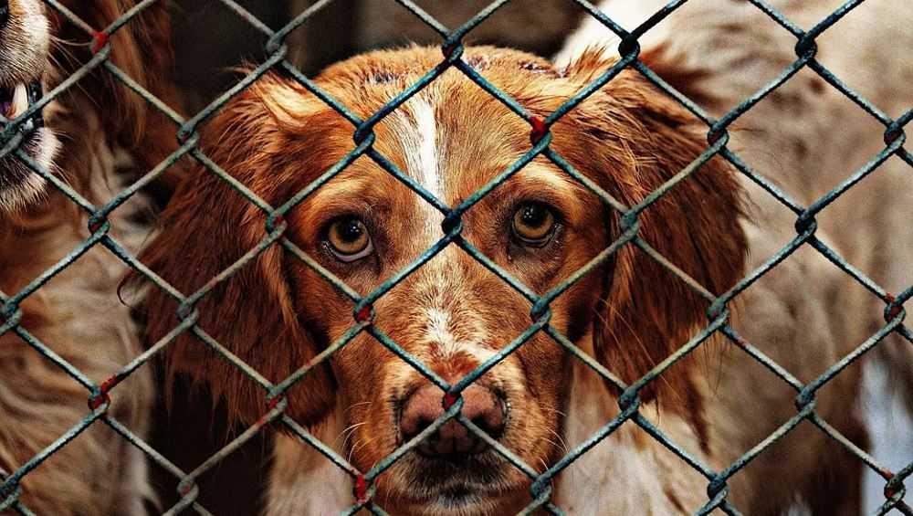 В Новозыбкове может появиться приют для бездомных животных