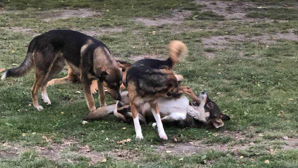 В Брянске собаки отвоевали себе очередную территорию