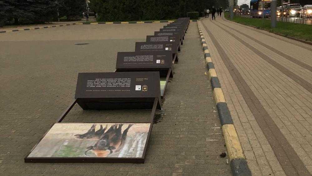 В Брянске на площади Партизан ветер повалил стенды с фото зубров
