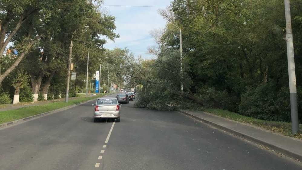 В Брянске дерево рухнуло на дорогу возле микрорайона Речной