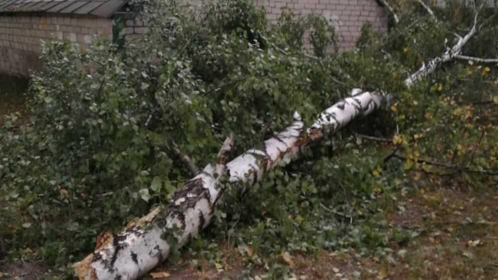 В Брянской области ураганный ветер за несколько часов повалил 22 дерева