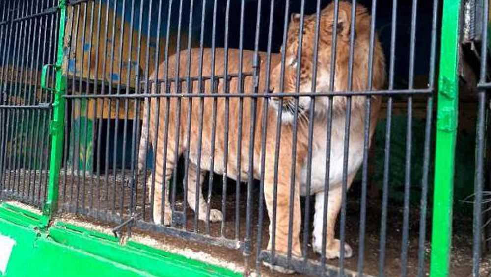 В Карачеве возобновил работу закрытый судом передвижной зоопарк