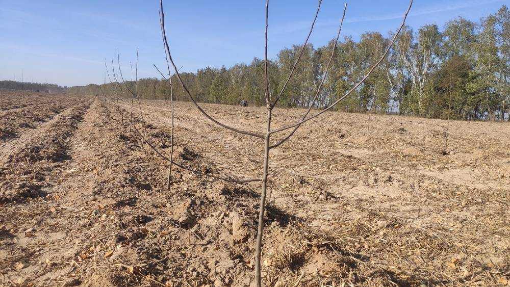 В Брасовском районе посадят 35500 яблонь и груши