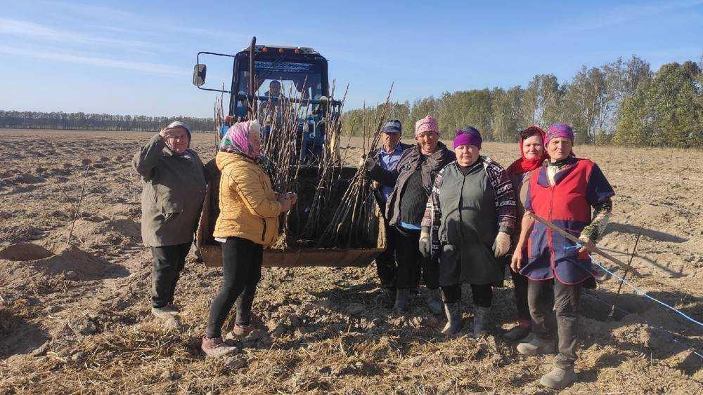В Брасовском районе на землях конезавода посадили яблоневый сад