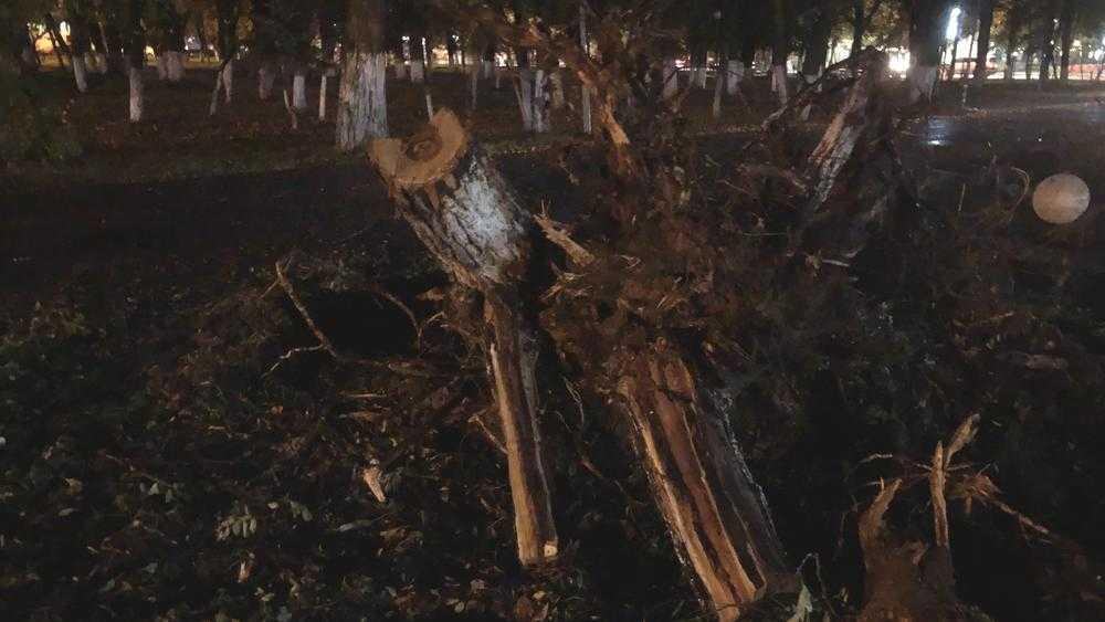 В брянском сквере Камозина при вырубке деревьев сломали фонари