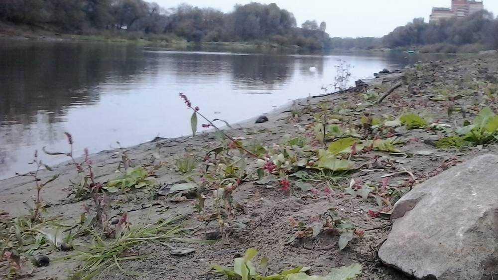 В Брянске расчистку русла реки Десны начнут с 10 июня