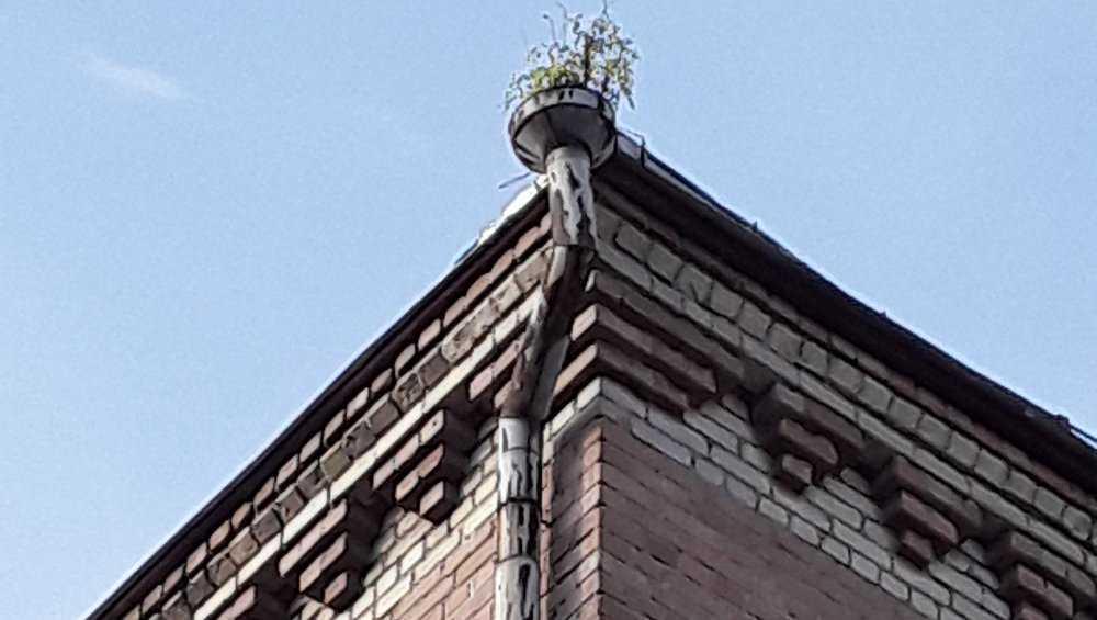В Брянске дом с проросшей травой на улице Ульянова приведут в порядок