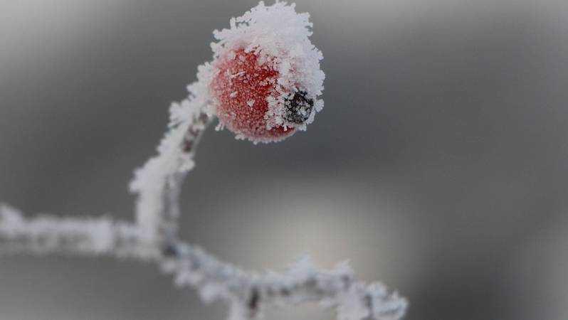 В Брянской области похолодает до 2 градусов мороза