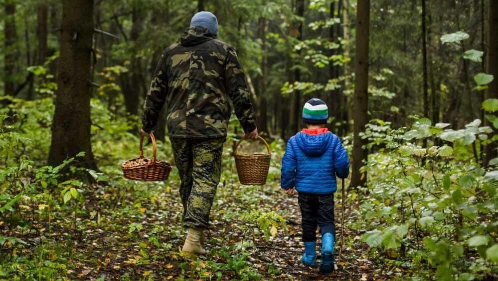 Под Карачевом полицейские спасли заблудившихся в лесу грибников