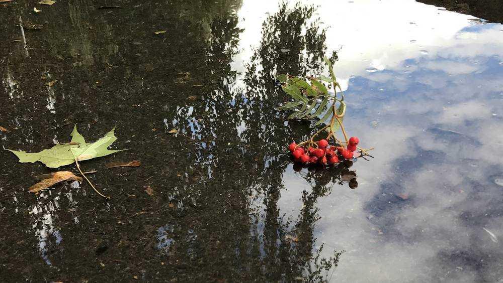 Брянской области 3 октября пообещали дождь и 22-градусное тепло