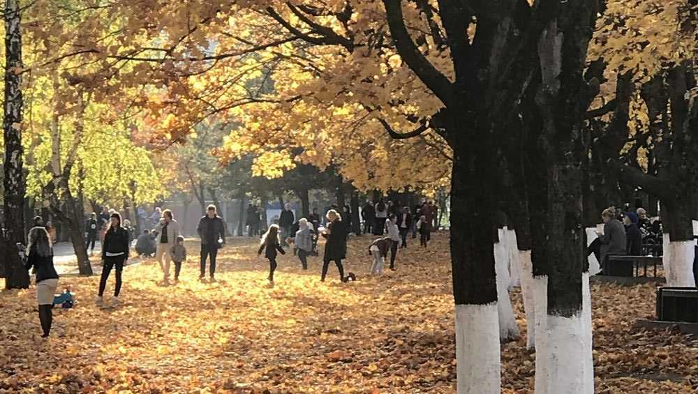 Жителям Брянской области 28 октября пообещали 13-градусное тепло