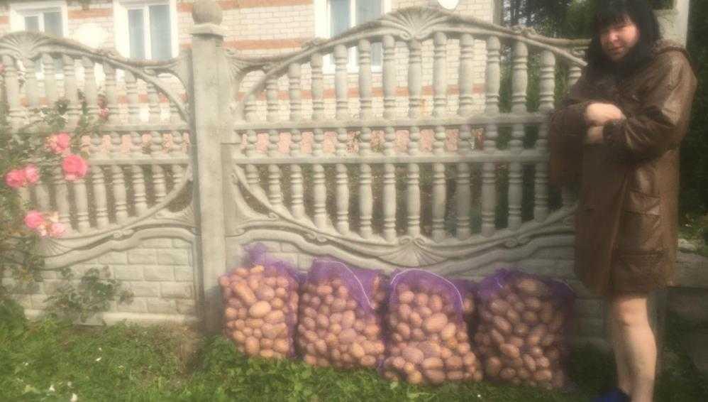 В Дубровке мусоровоз увёз с отходами три мешка картошки