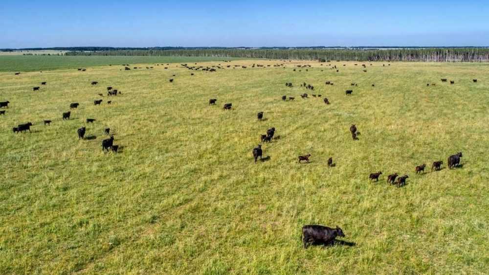 «Мираторг» и ВЭБ.РФ подтвердили устойчивый рост проекта мясного скотоводства