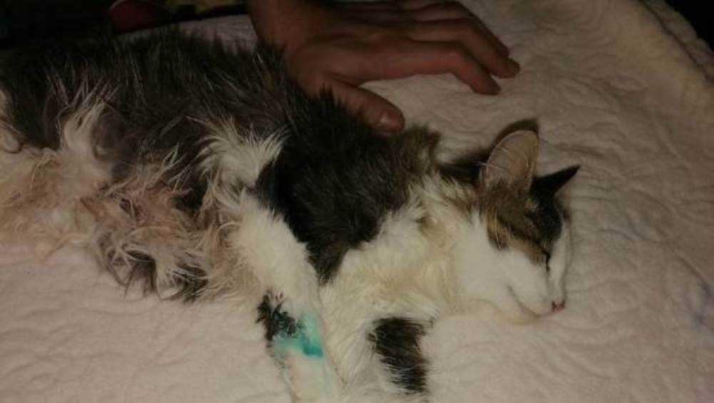 В Карачеве сотрудников завода обвинили в жестоком избиении котёнка