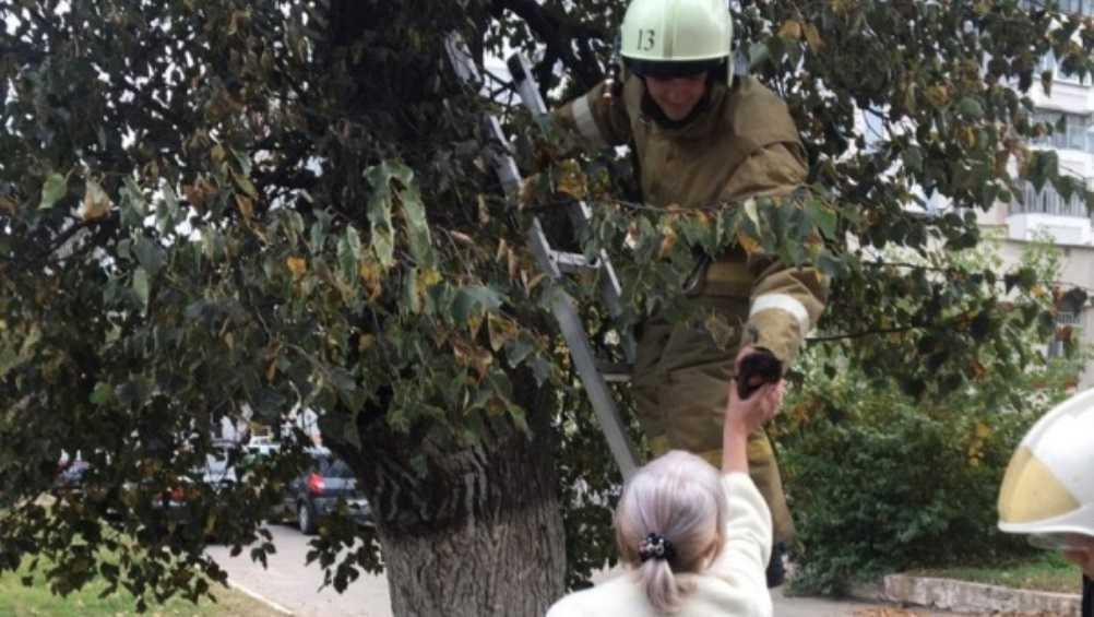В Брянске сотрудники МЧС спасли застрявшего на дереве котёнка