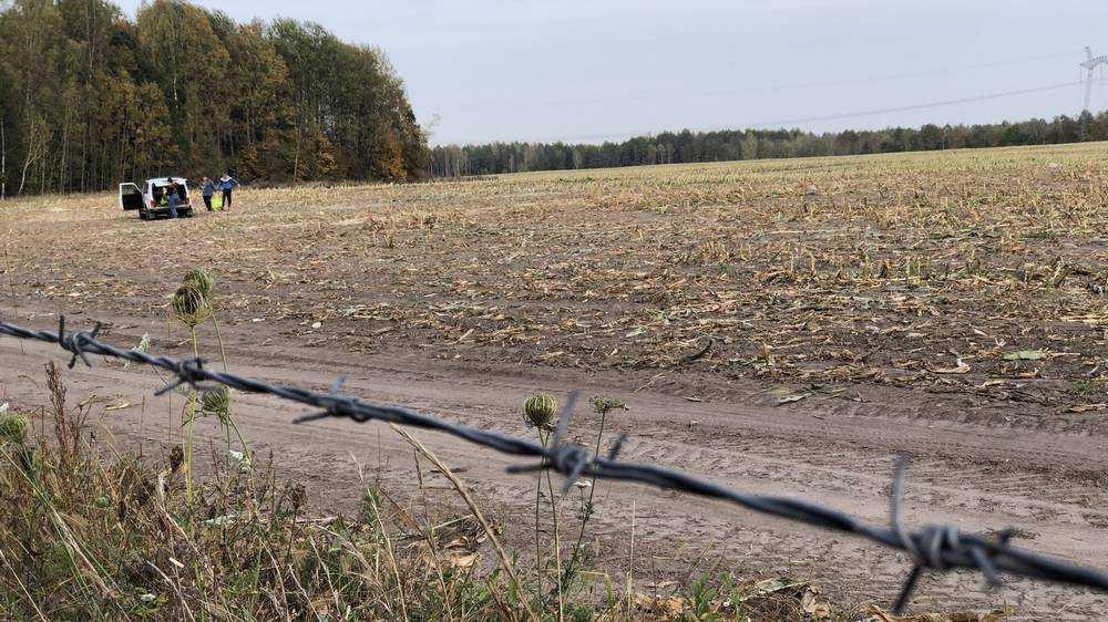 Брянские селяне за колючей проволокой стали собирать остатки кукурузы