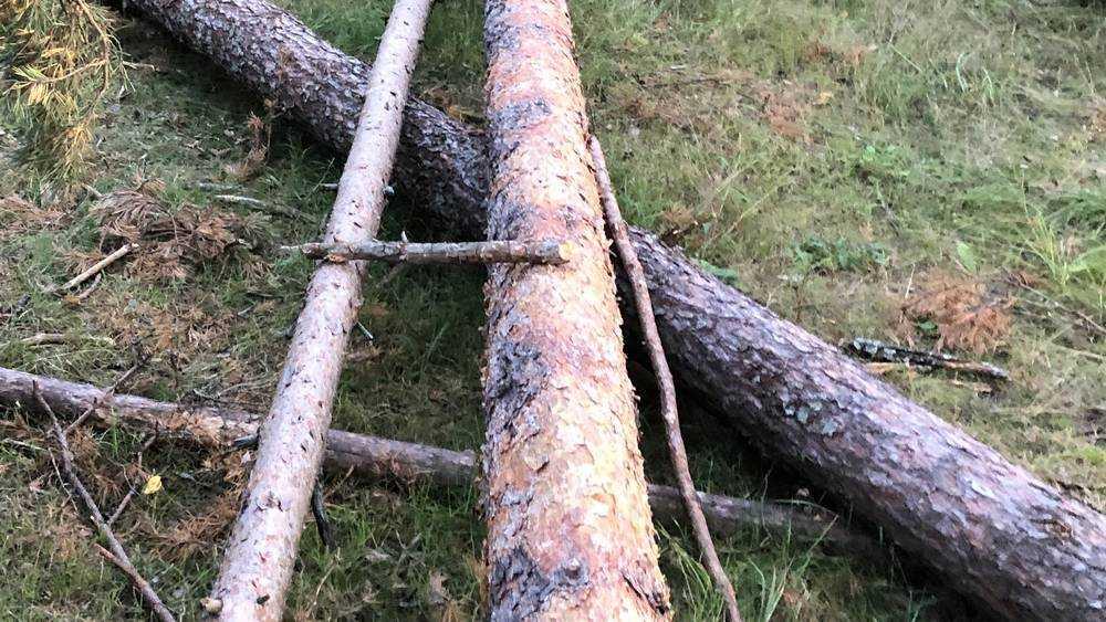 В брянской роще «Соловьи» стали по вечерам пилить деревья