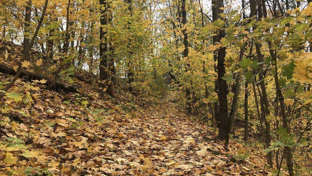 В Брянскую область 4 октября придёт летнее тепло