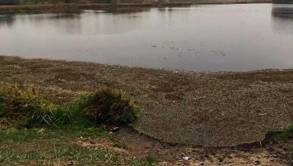 Жителей Брянска встревожило обмеление Ковшовского пруда