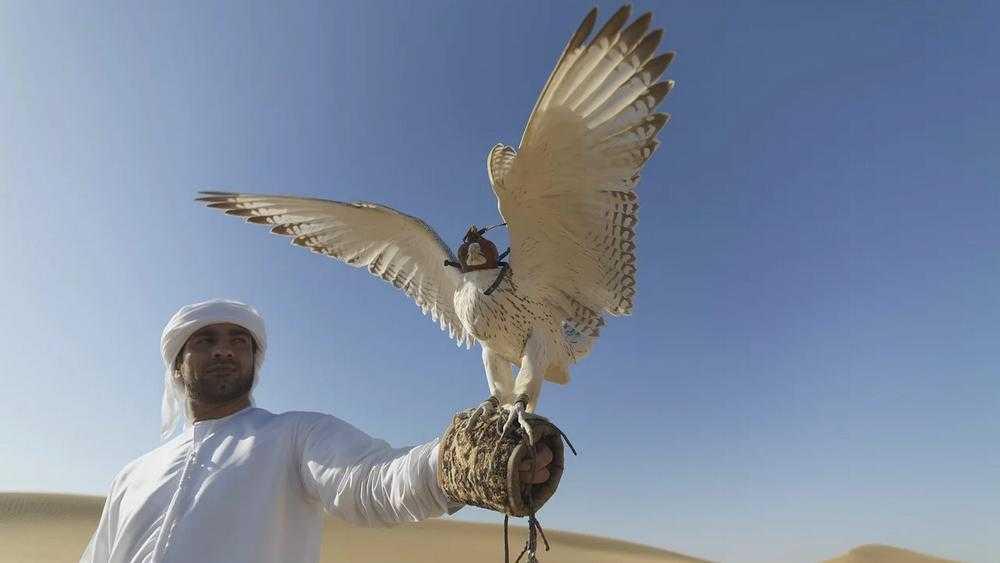 Брянских производителей пригласили в Объединенные Арабские Эмираты