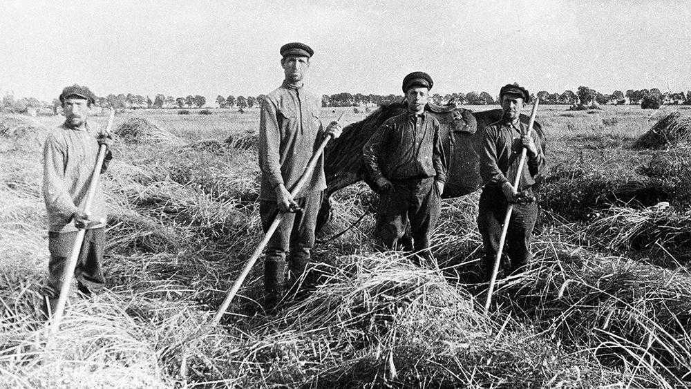 Брянские колхозники вырастили богатый урожай конопли