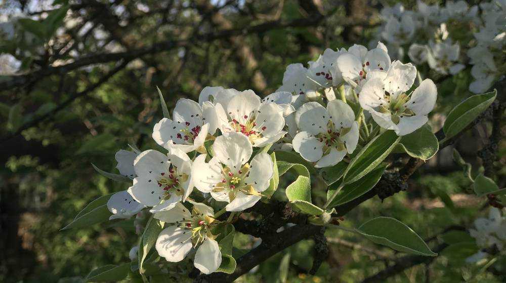 Садоводы Брянской области получат поддержку от государства