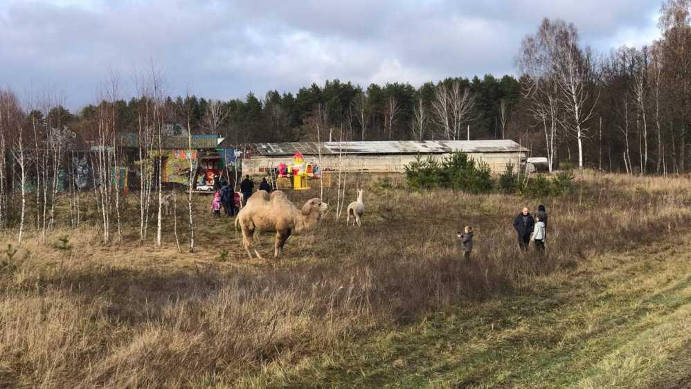 В Брянской области возле трассы заметили верблюда