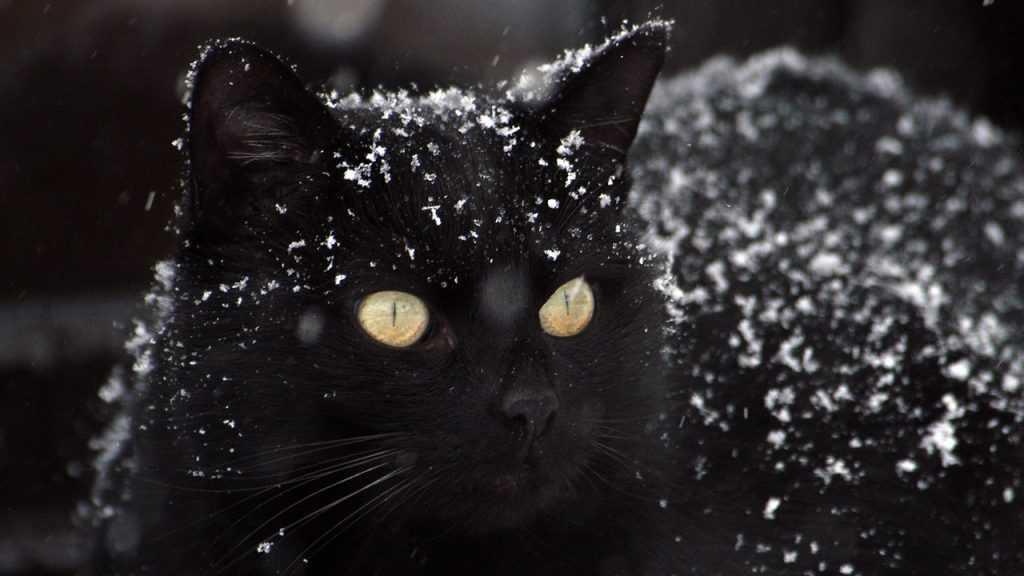 В Брянске появился «кошачий» мошенник