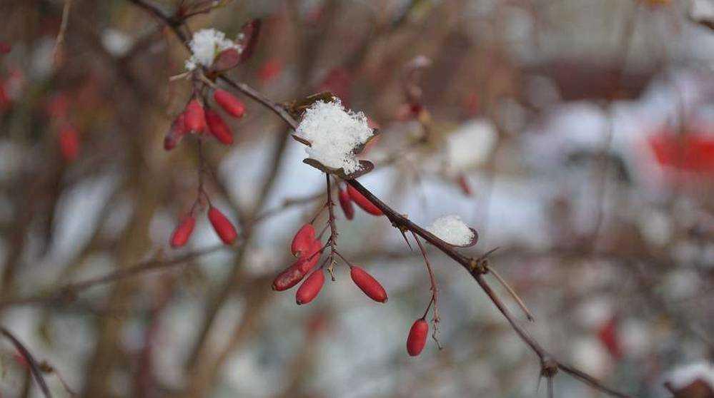В Брянской области 10 марта похолодает до 19 градусов мороза