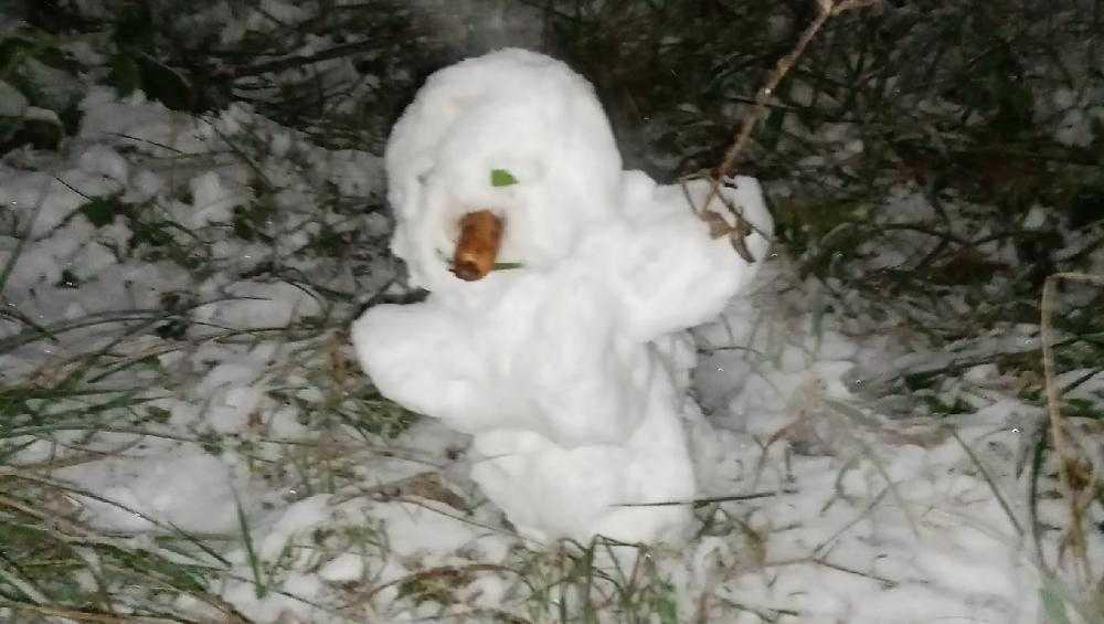 С появлением первого снега брянцы бросились лепить снеговиков