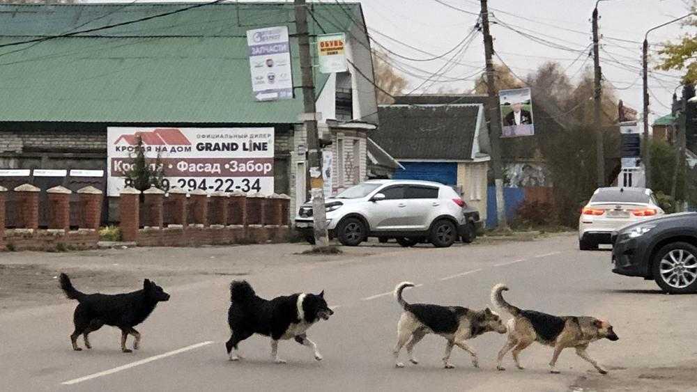 На брянские города свалилась собачья напасть