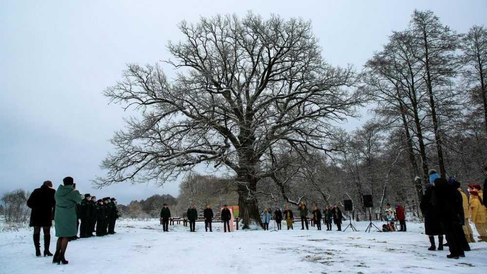 Партизанский дуб Брянской области получил памятный знак