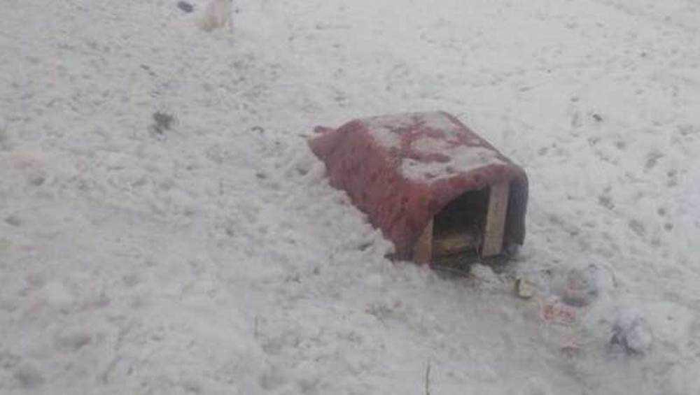 Под Брянском на трассе неизвестные выбросили будку с собакой