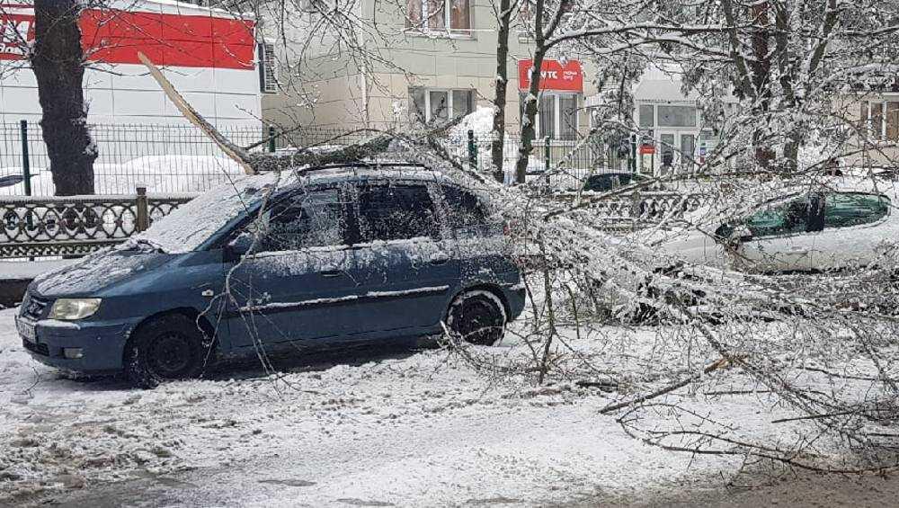 В Брянске после снегопада несколько деревьев рухнули на машины
