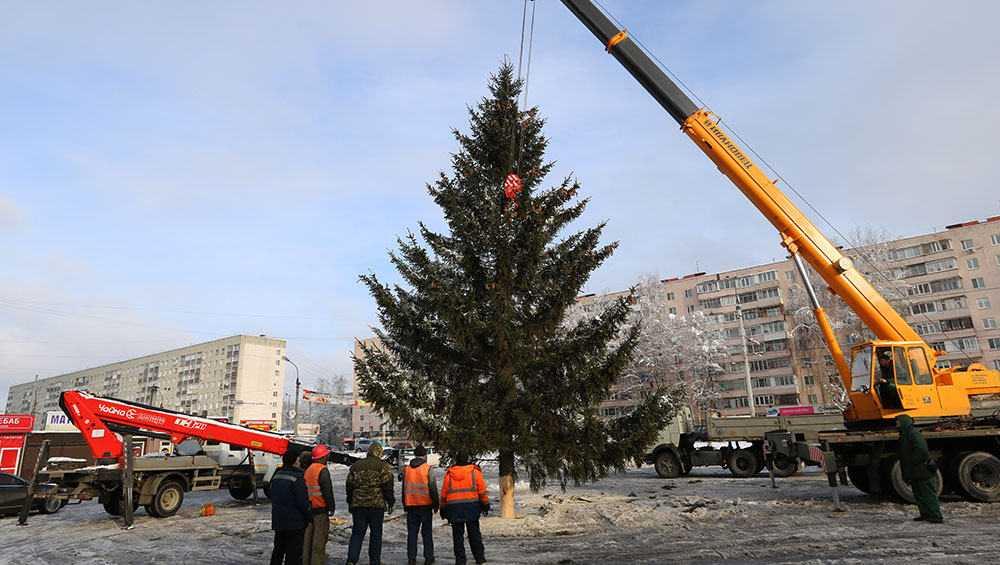 В центре Брянска установили первую живую новогоднюю ёлку