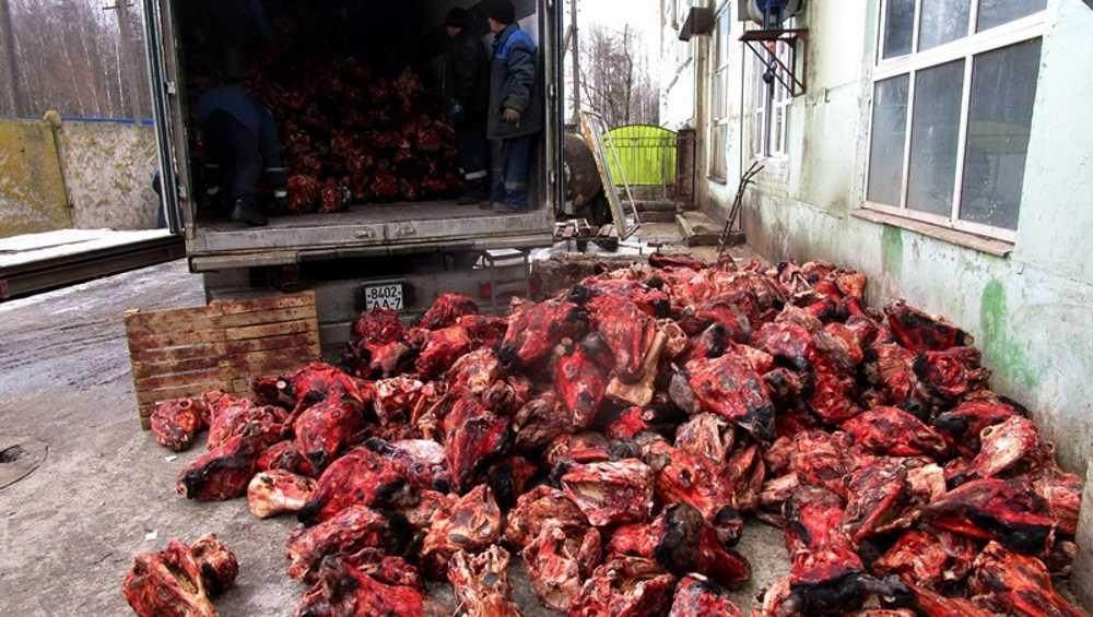 В Брянской области утилизировали 22 тонны говяжьих голов