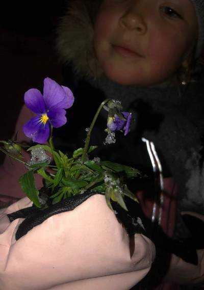 Диво дивное: Из-под свежих сугробов в Брянске дети извлекли цветущую фиалку