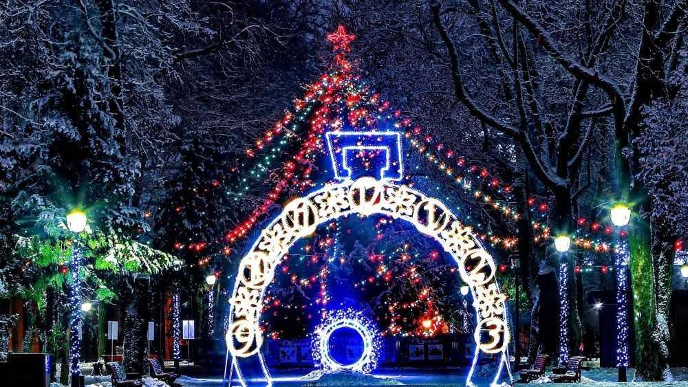 Новогодняя ель Брянска оказалась одной из самых высоких в России
